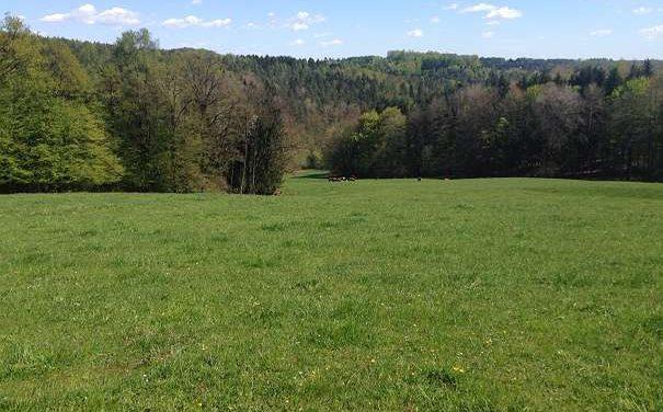 Riesiges Grundstück mit Wiese, Wald und Landwirtschaft