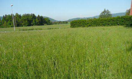 Grundstück in Weinitzen